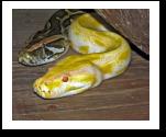Reptile Room book report